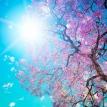 spring-desktop-backgrounds-hd